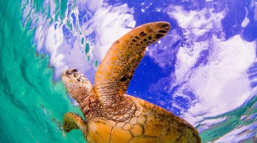 أهم حيوانات المحيط الهادئ