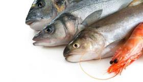 تفسير حلم رؤية السمك فى المنام