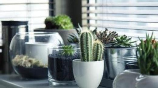 ما هى النباتات التى تعمل على تدفق الطاقة الإيجابية؟