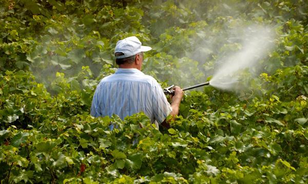 دراسة جدوى مشروع أسمدة ومبيدات