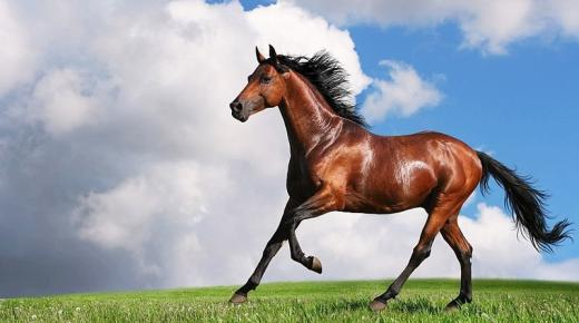 أحلى صور أحصنة 2020 HD أجمل صور خلفيات ورمزيات خيول عربية أصيلة