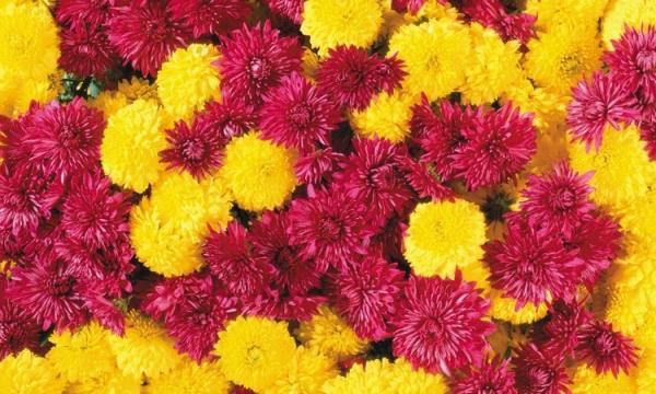 أروع صور زهور 2020 HD أجمل صور خلفيات ورمزيات رومانسية للأزهار والنباتات