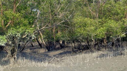 السياحة فى غابات سونداربانس