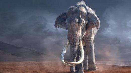 من هم أصحاب الفيل؟