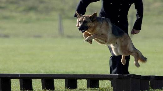 تعرف على أسباب فوبيا الكلاب والأعراض وكيفية العلاج