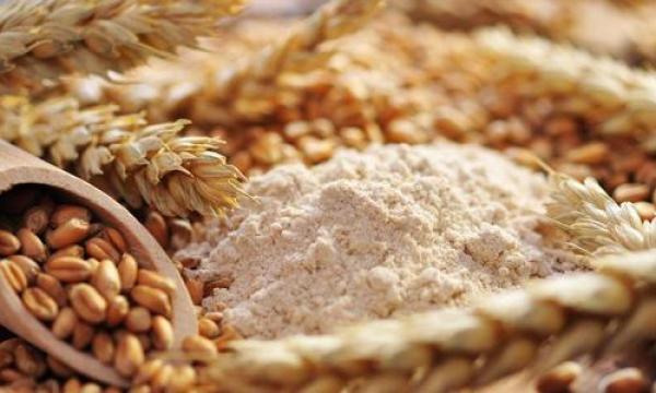 مسبب تحسس القمح