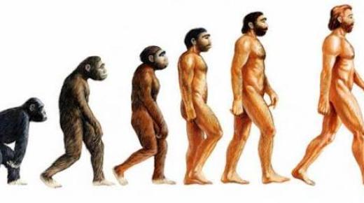 ما هي نظرية التطور؟