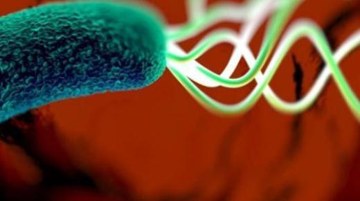 ما هي بكتيريا المعدة ؟