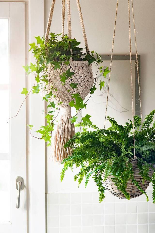 Plantas-de-interior Hiedra 00506981 O