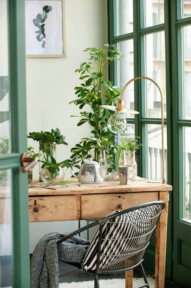 Plantas-de-interior poto 00500365 O