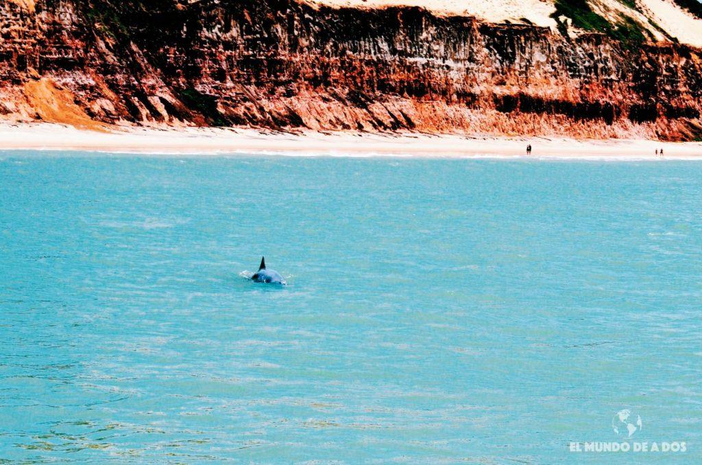 Baia dos Golfinhos. Playas de Pipa
