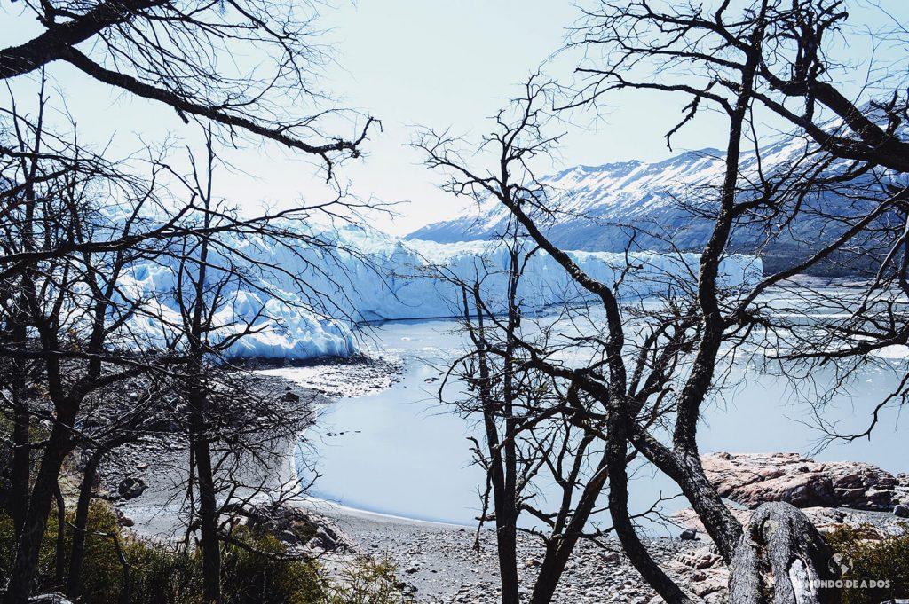 El glaciar desde el bosque 3. Minitrekking Perito Moreno