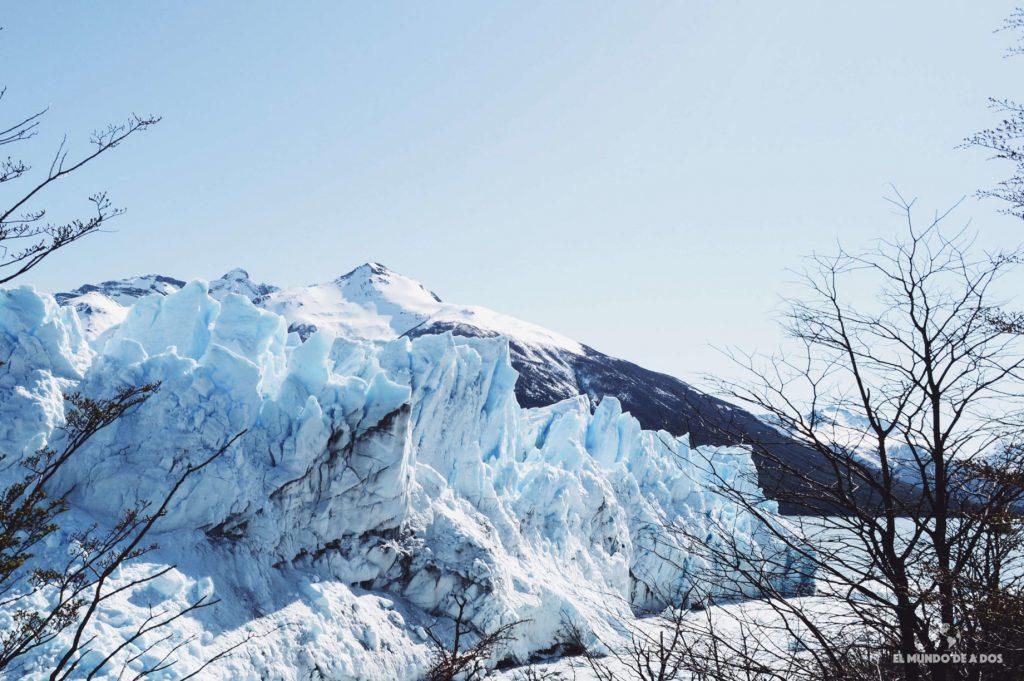 Glaciar entre las ramas de los árboles. Minitrekking Perito Moreno