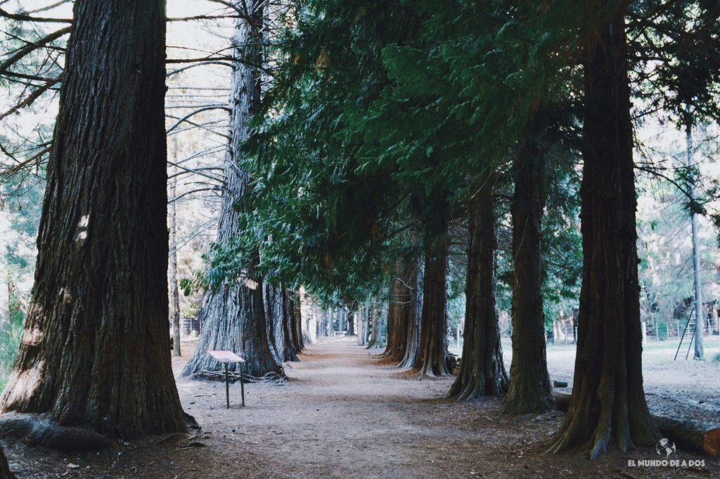 Camino de árboles gigantes. Isla Victoria y bosque de arrayanes.