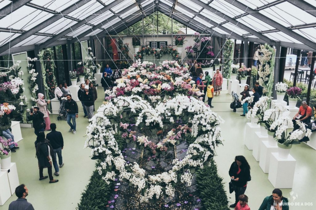 Invernadero de orquídeas. Parque Keukenhof