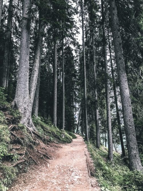 Bosque en el Lago di Braies