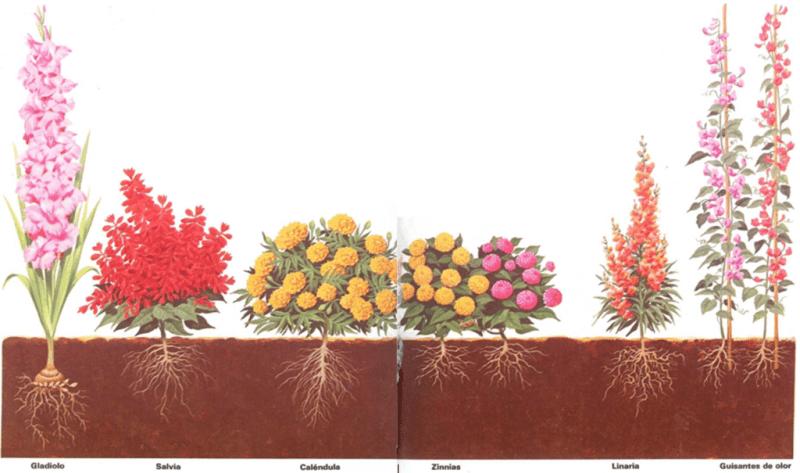 Flores que se plantan cada primavera