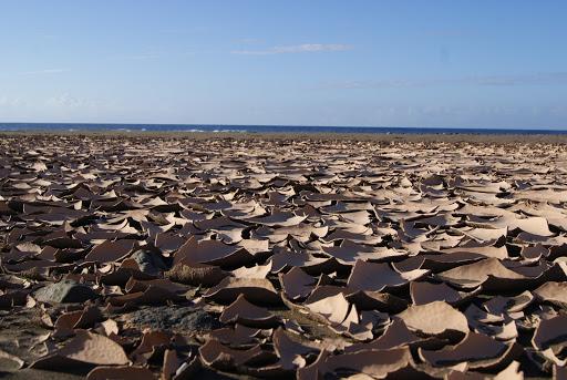 Playas del oeste de Fuerteventura - Playa de Garcey