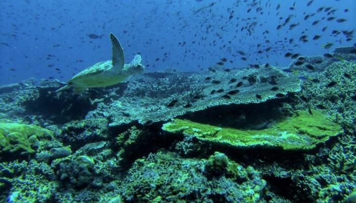Bucear en Sipadan. Una de las mejores inmersiones del Mundo.