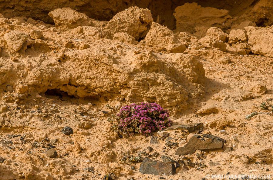 Barranco de los Encantados - flora