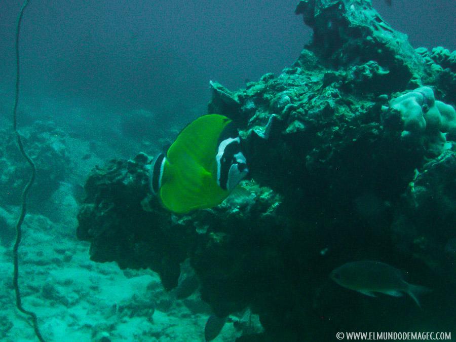 Razones para viajar a Tailandia - diving Koh Tao
