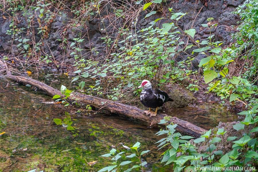 Fauna en el barranco de Azuaje