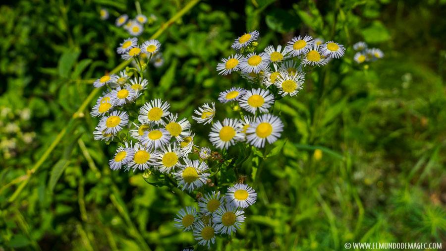 flores en Balaton