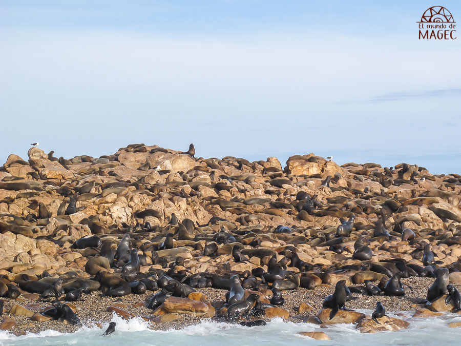 Colonia leones marinos