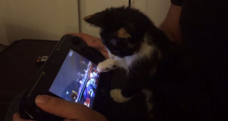 A kitten, a gamer and Super Smash Bros. for Wii U