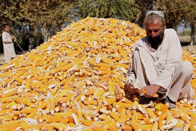 afganistan efe