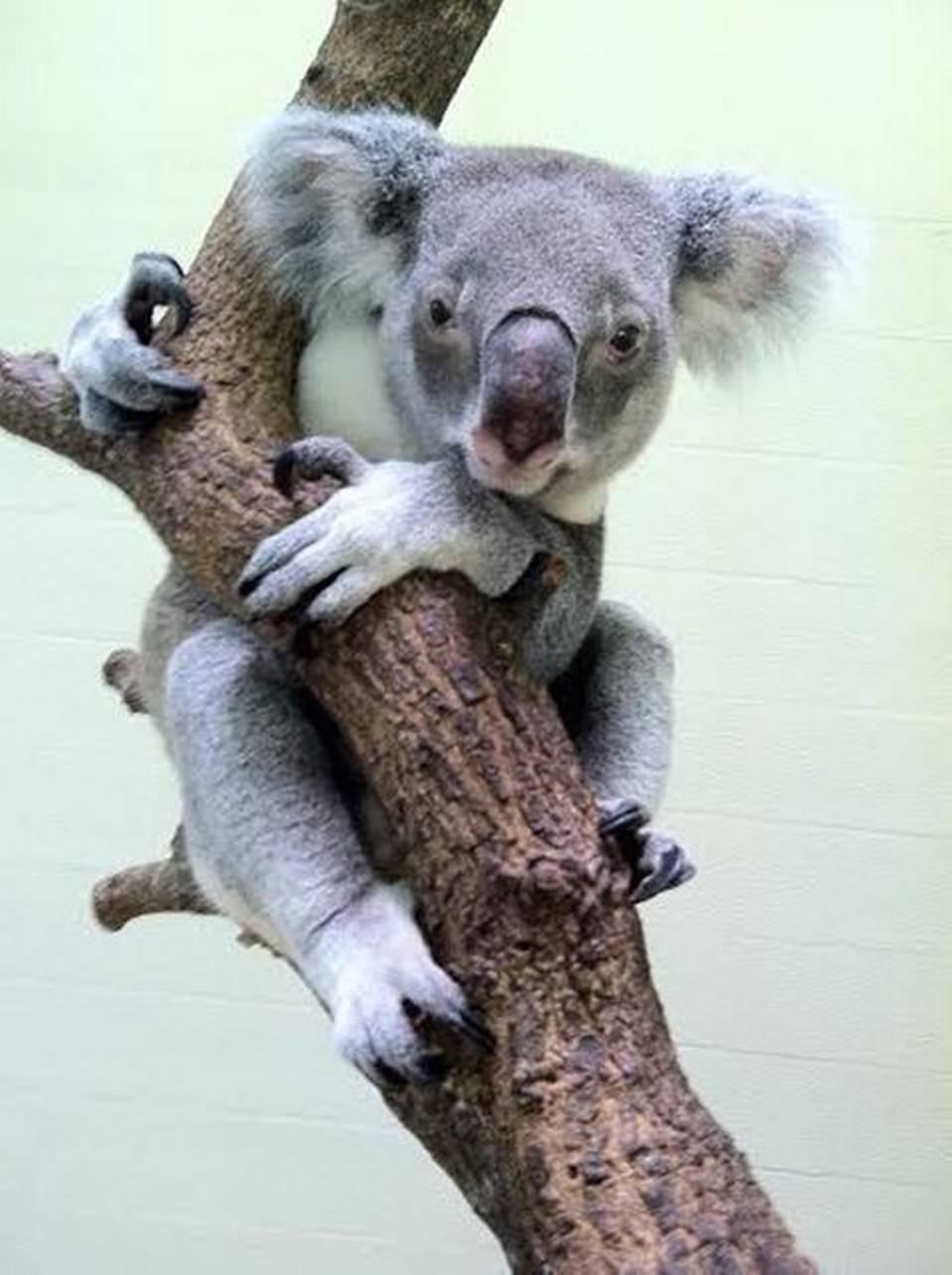 Apartamentos Koala Empleo