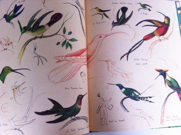 141121 oiseaux10 690x515 Lenvol des oiseaux