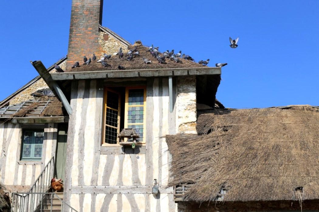 160315 versailles ferme Un dimanche au hameau de la reine