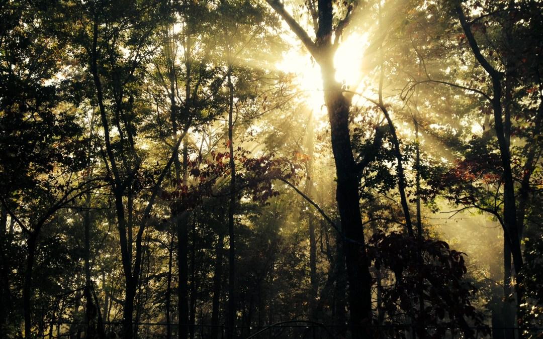 Yoga and Wellness Nature Retreat