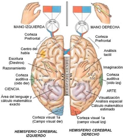 esquema zona cerebro