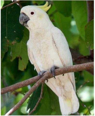 Cockatoo-photo