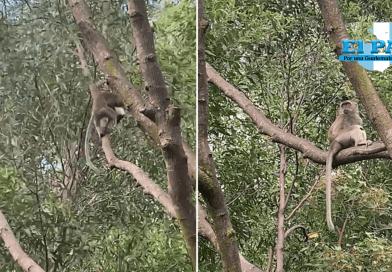 Mono salvaje roba un perro