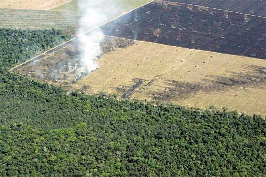 Deforestación en las Amazonas