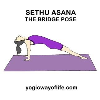 sethu_asana_bridge_pose_yoga-2