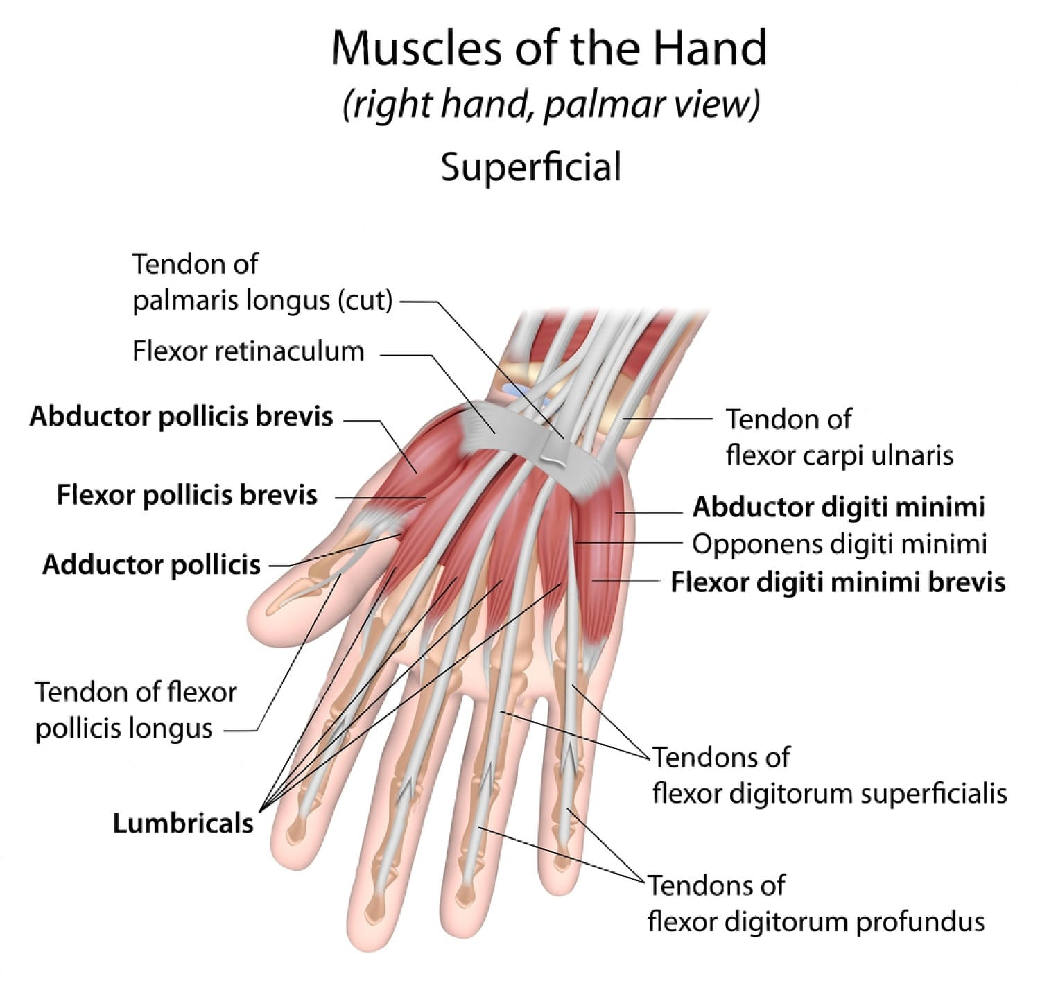 Wrist Injuries: Science Of Intersection Syndrome