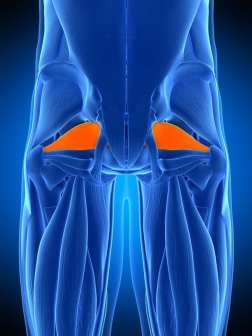 piriformis muscle blue orange el paso tx