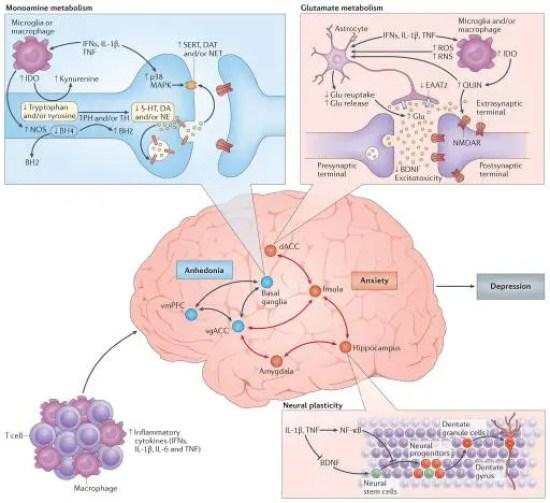 Figuras de citocina 3 en el cerebro | El Quiropráctico El Paso, TX