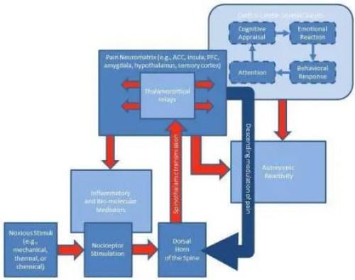 Esquema del Diagrama del Sistema Nervioso Humano 1 | El Quiropráctico El Paso, TX