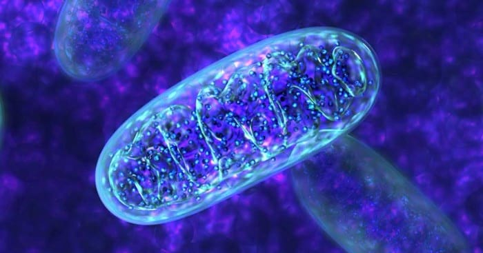 The Emerging Role Of Nrf2 In Mitochondrial Function