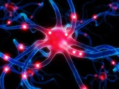 Endocrinologia funzionale: equilibrio delle prostaglandine