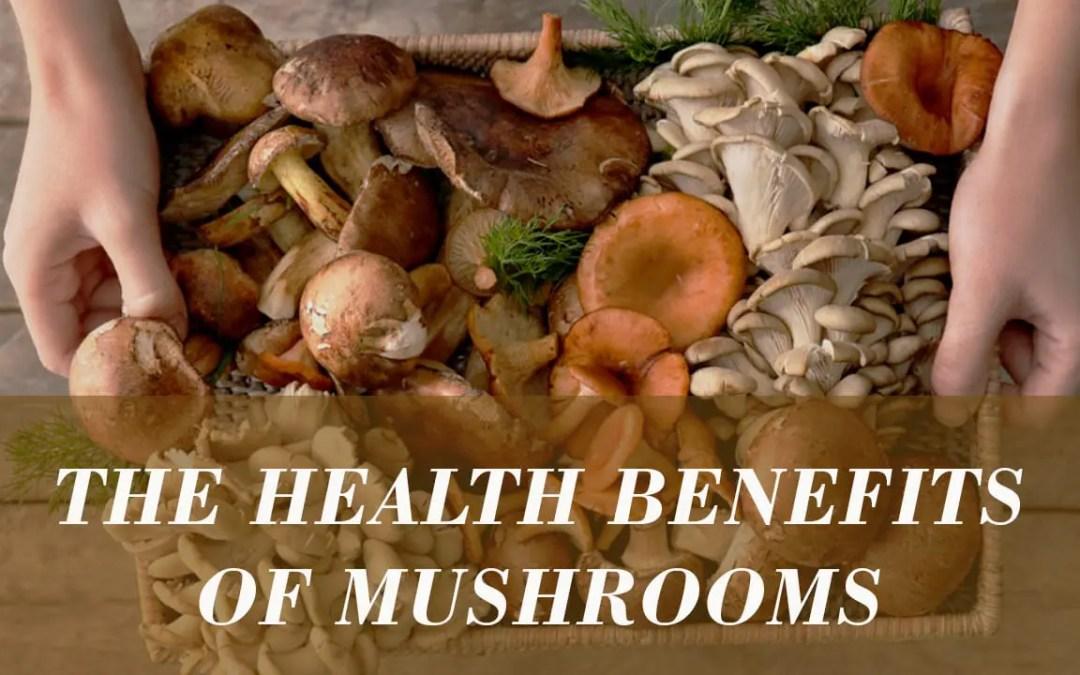The Top 8 Mushrooms for Immune Health