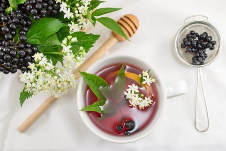 Why The Immune System Needs Elderberry