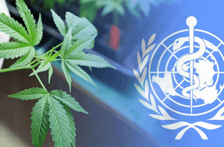 Viena: La ONU despenaliza y reconoce propiedades de la marihuana en medicinas