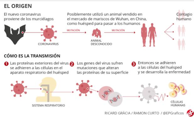 Origen y transmisión del coronavirus