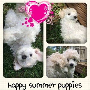 happysummerpuppies